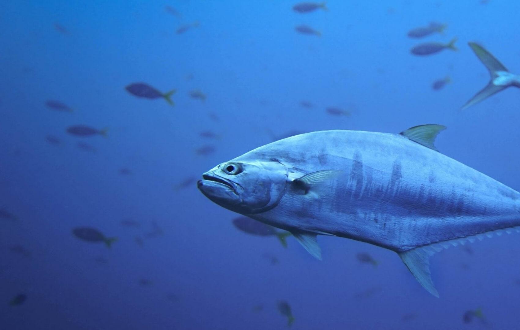 pez (1) (1)